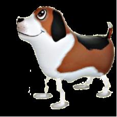 Balón Pes chodiaci