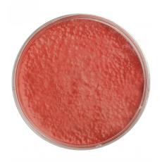 Prášková farba na tvár červená 15 g
